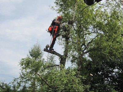 Kletterausrüstung Baum Fällen : Gartenholzerei produkte forstbetrieb mutschellen